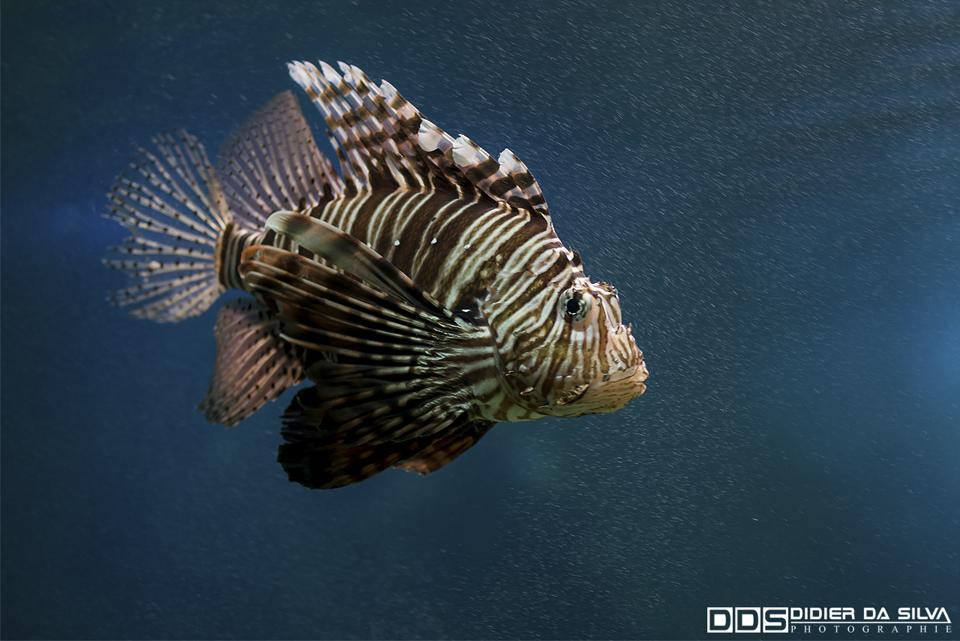 Aquarium Vannes 02 - Morbihan - France.jpg