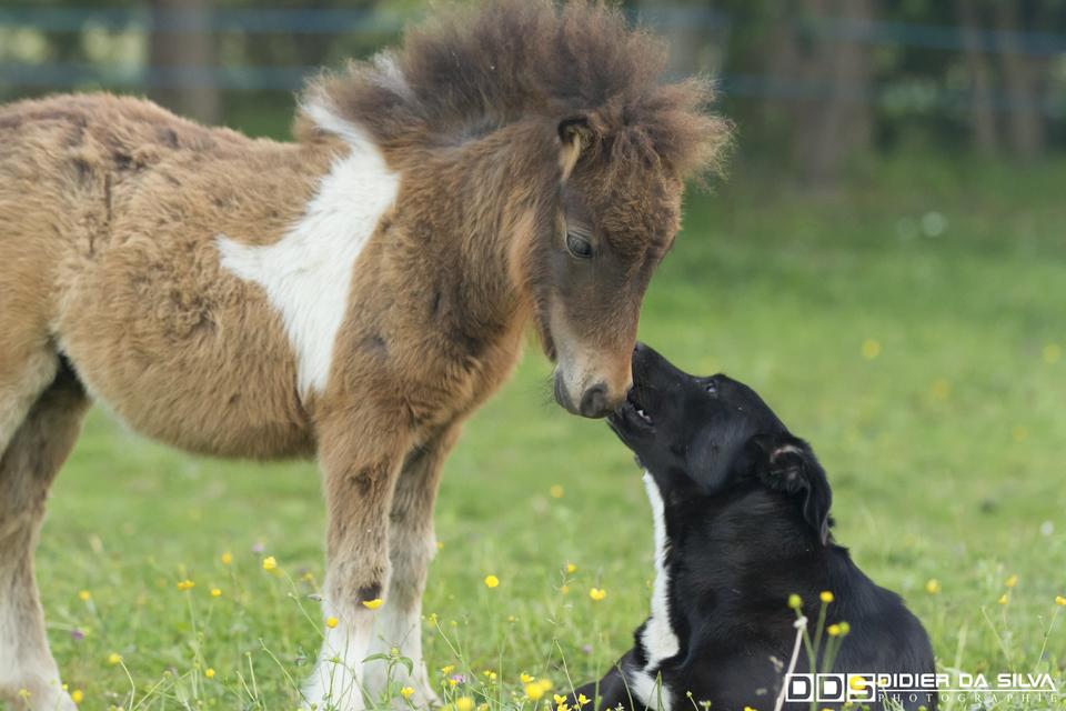 L'amour entre animaux - Morbihan - France.jpg