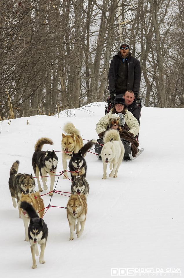 2014 - Valloire - Ballade en chiens de traineaux.jpg