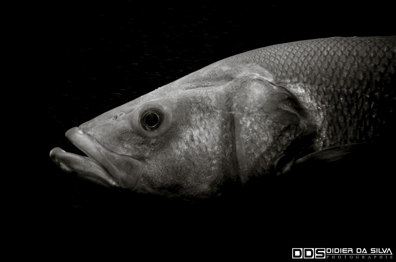 Aquarium_Vannes_004