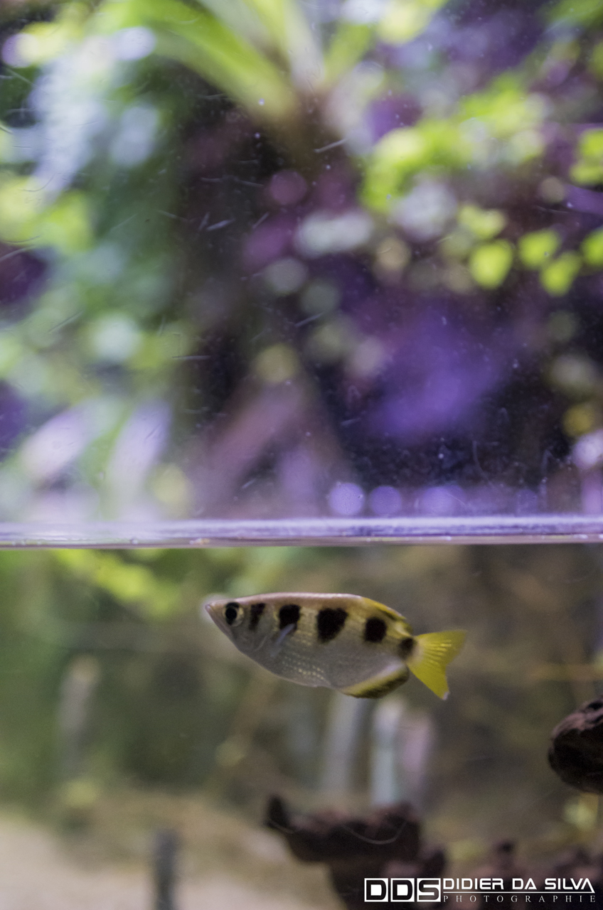 Aquarium_Vannes_006