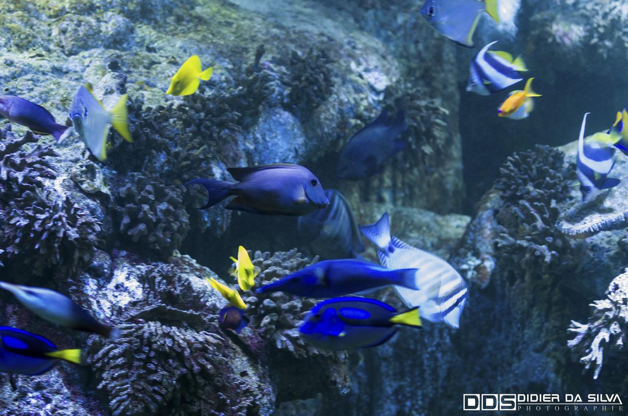 Aquarium_Vannes_008