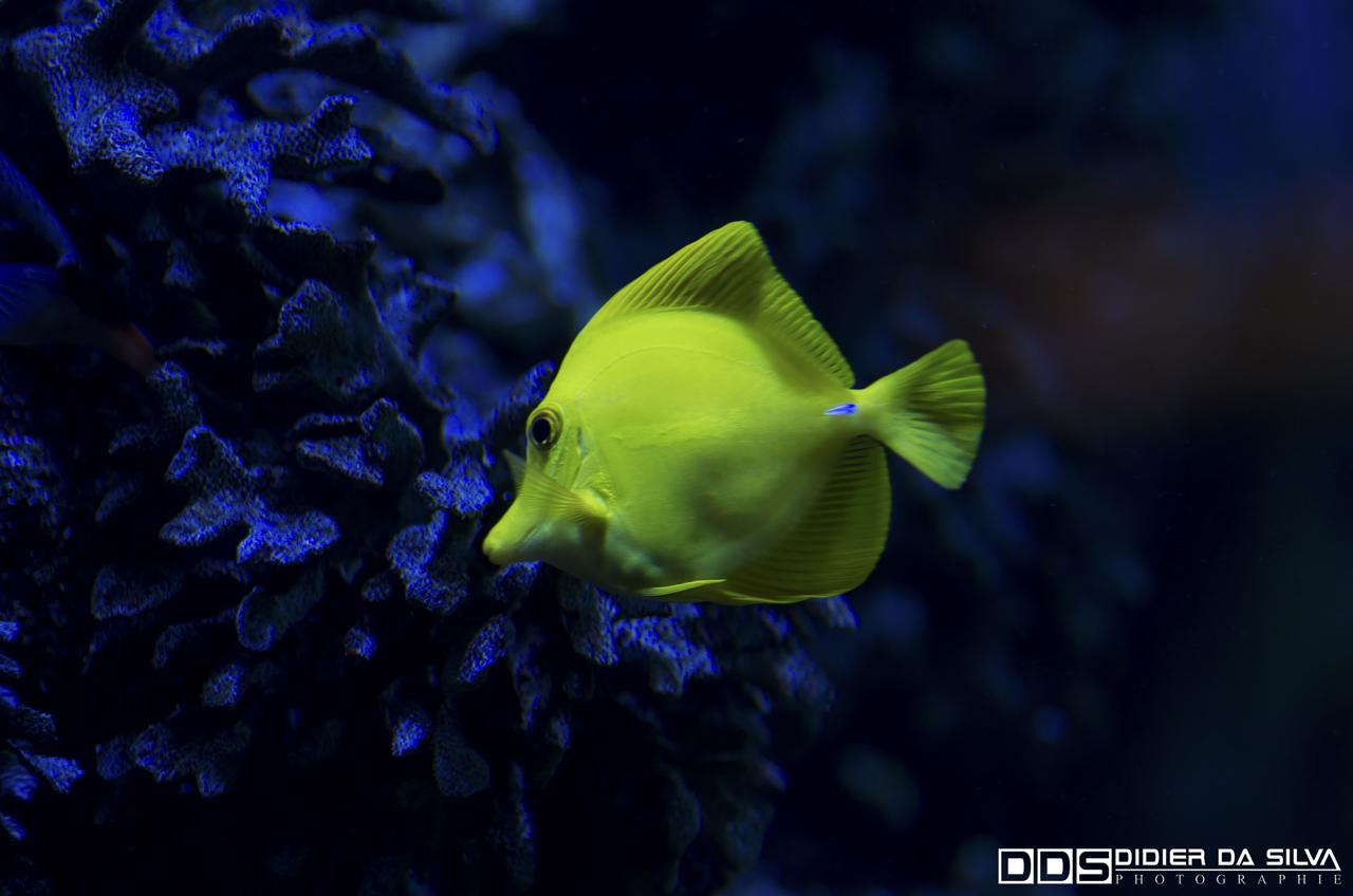 Aquarium_Vannes_009