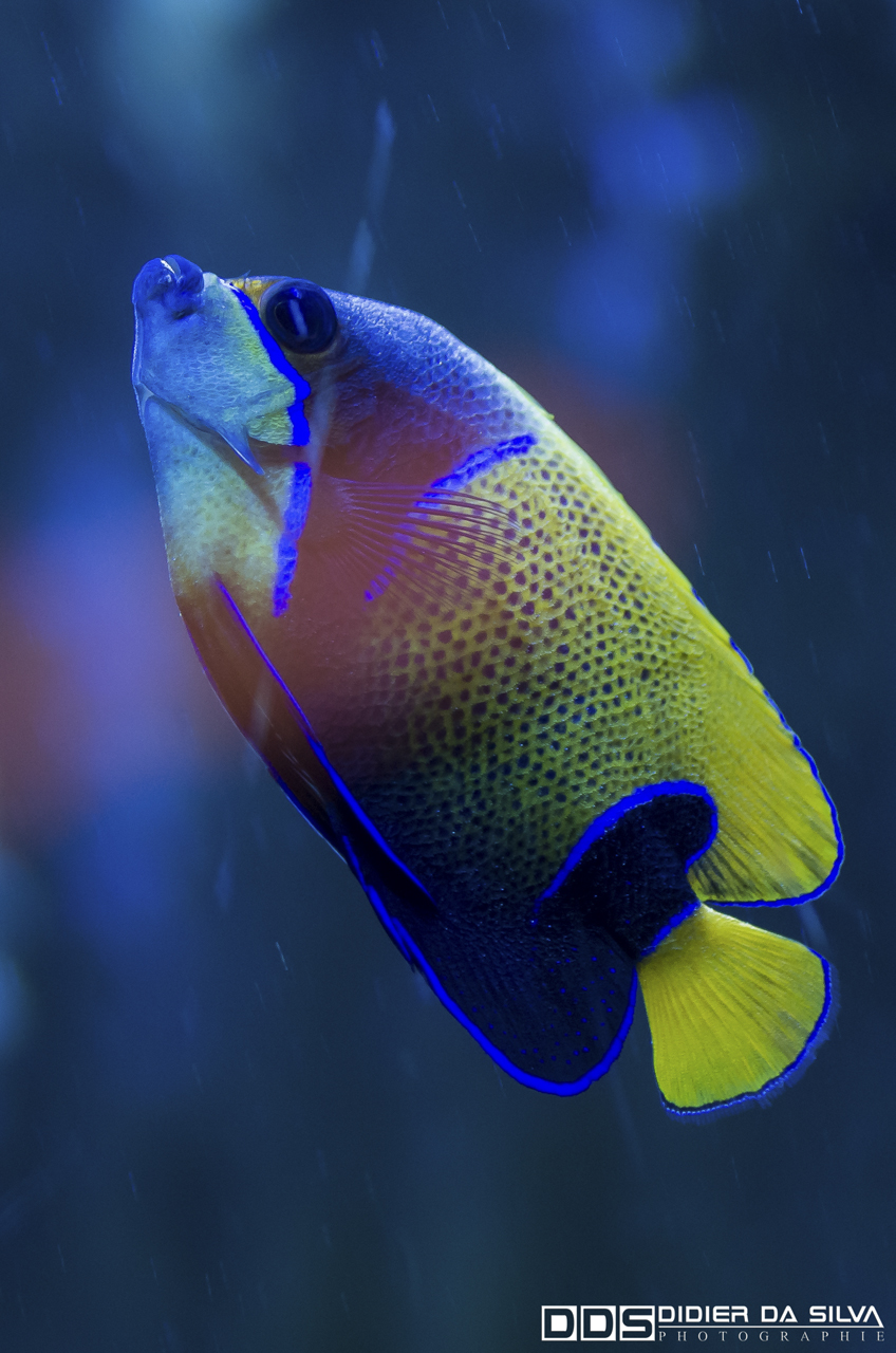 Aquarium_Vannes_010