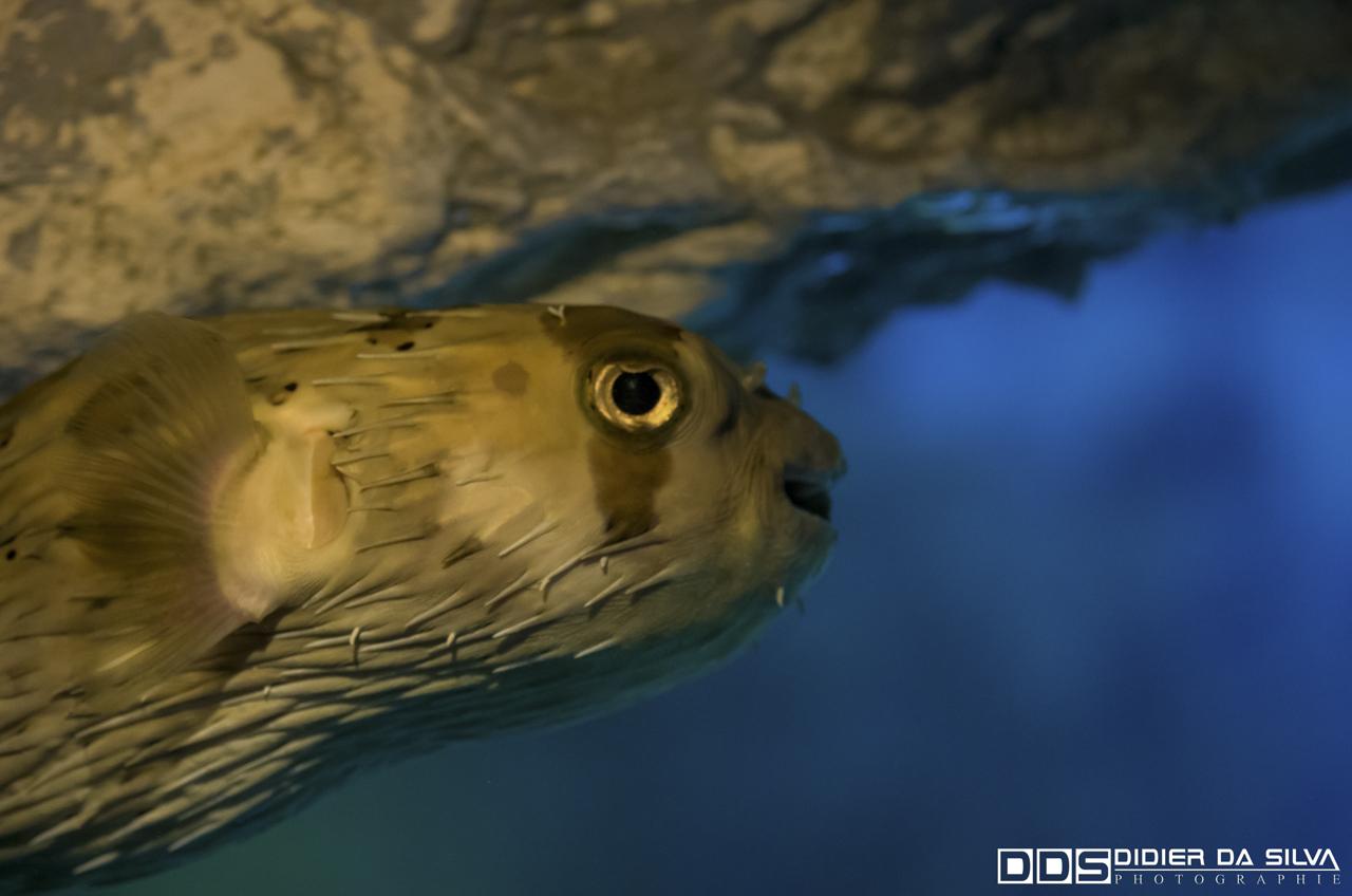 Aquarium_Vannes_011