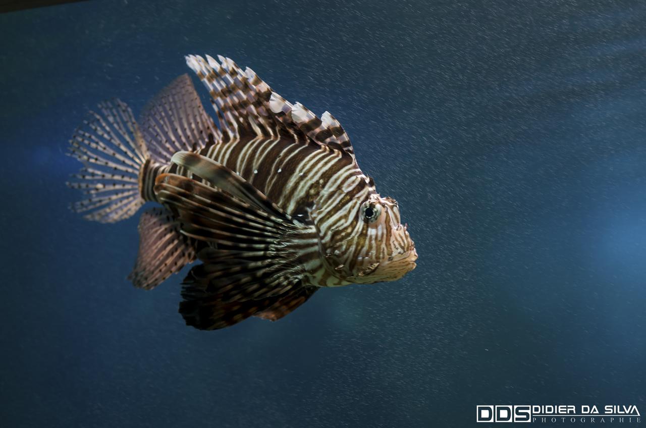 Aquarium_Vannes_012