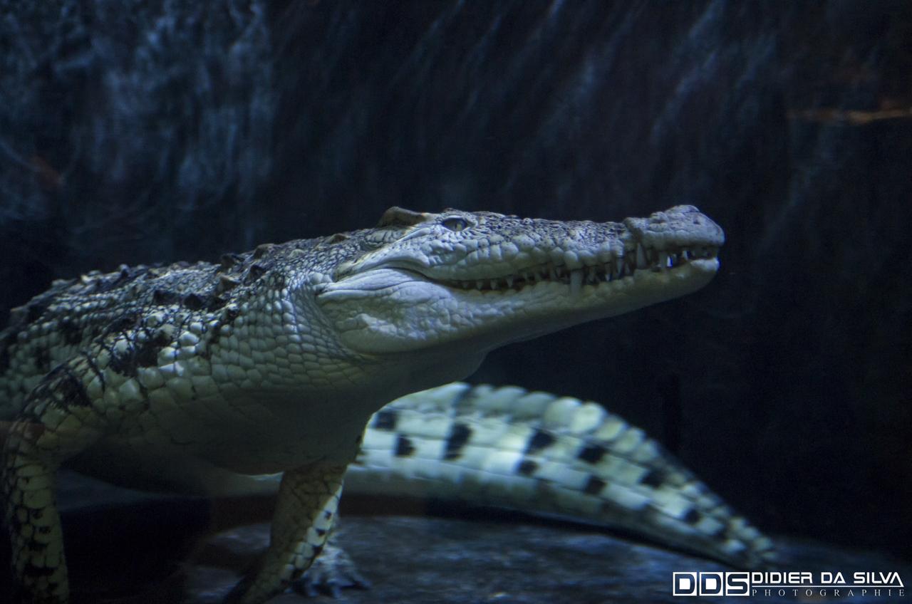 Aquarium_Vannes_013