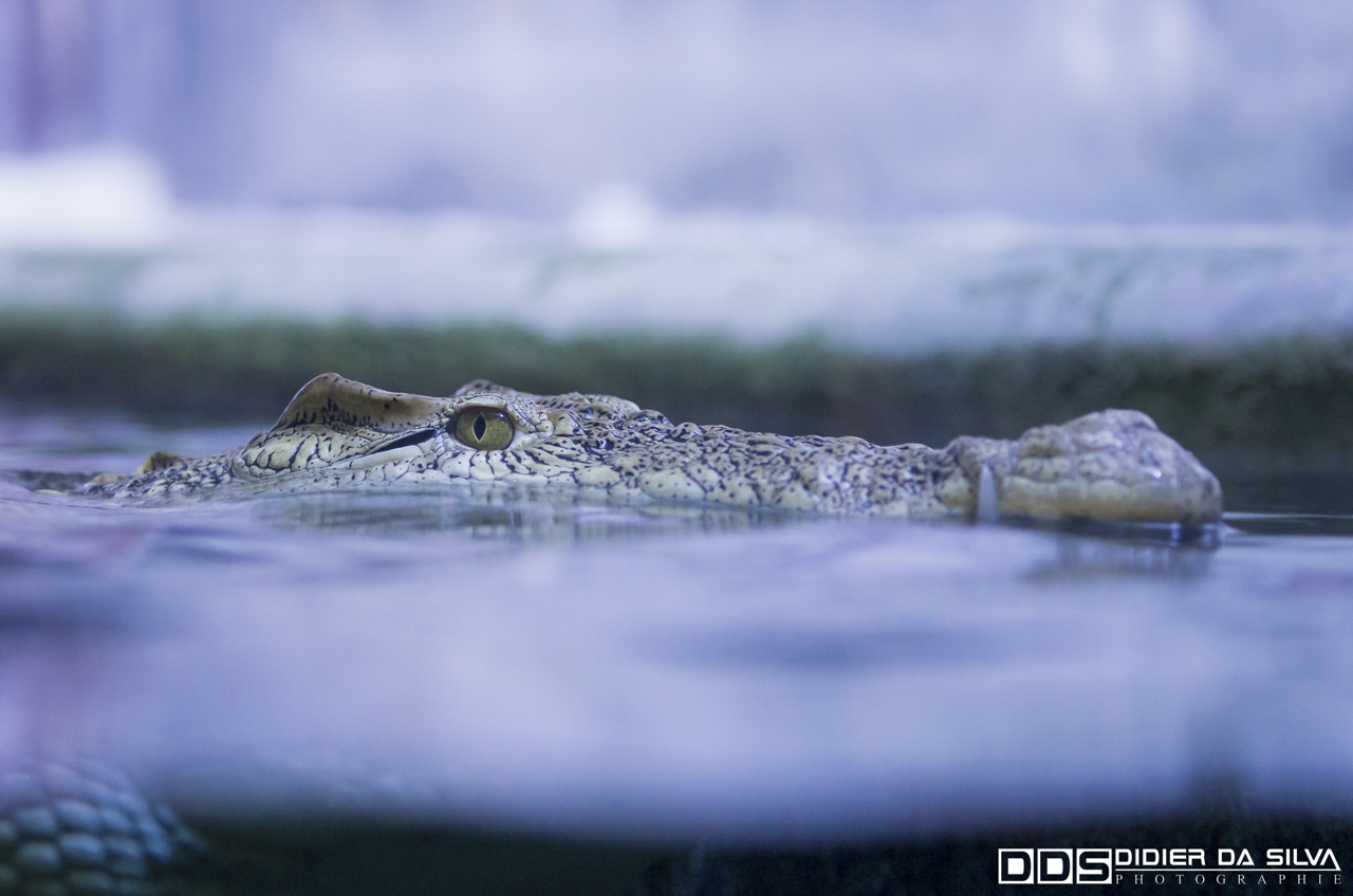 Aquarium_Vannes_014
