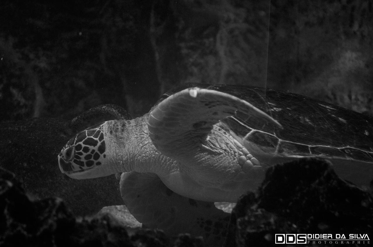 Aquarium_Vannes_016