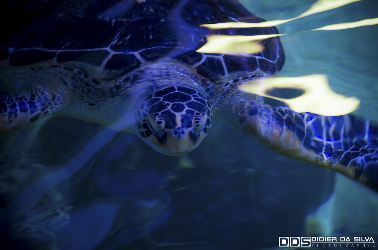 Aquarium_Vannes_017