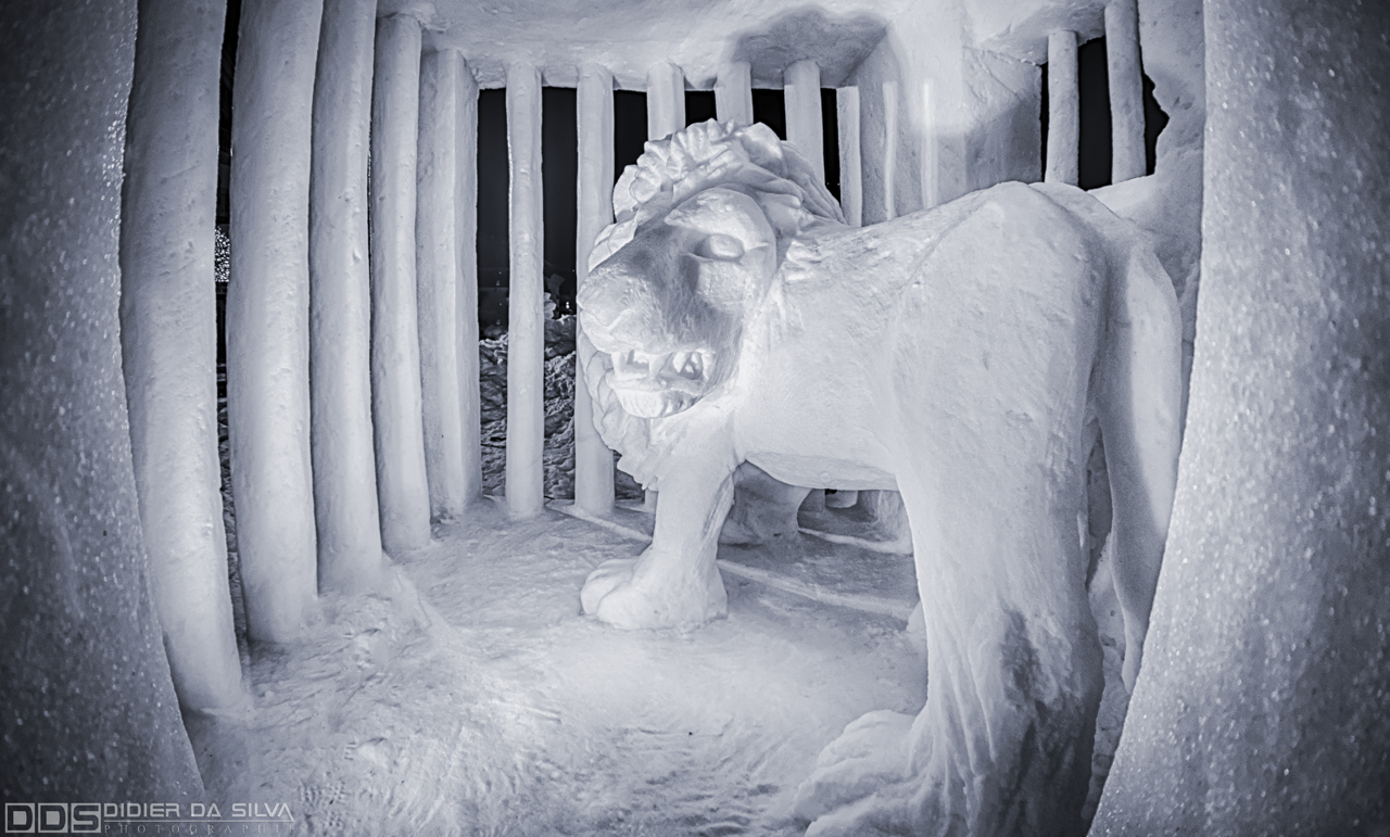 Lion en cage sculpture sur glace